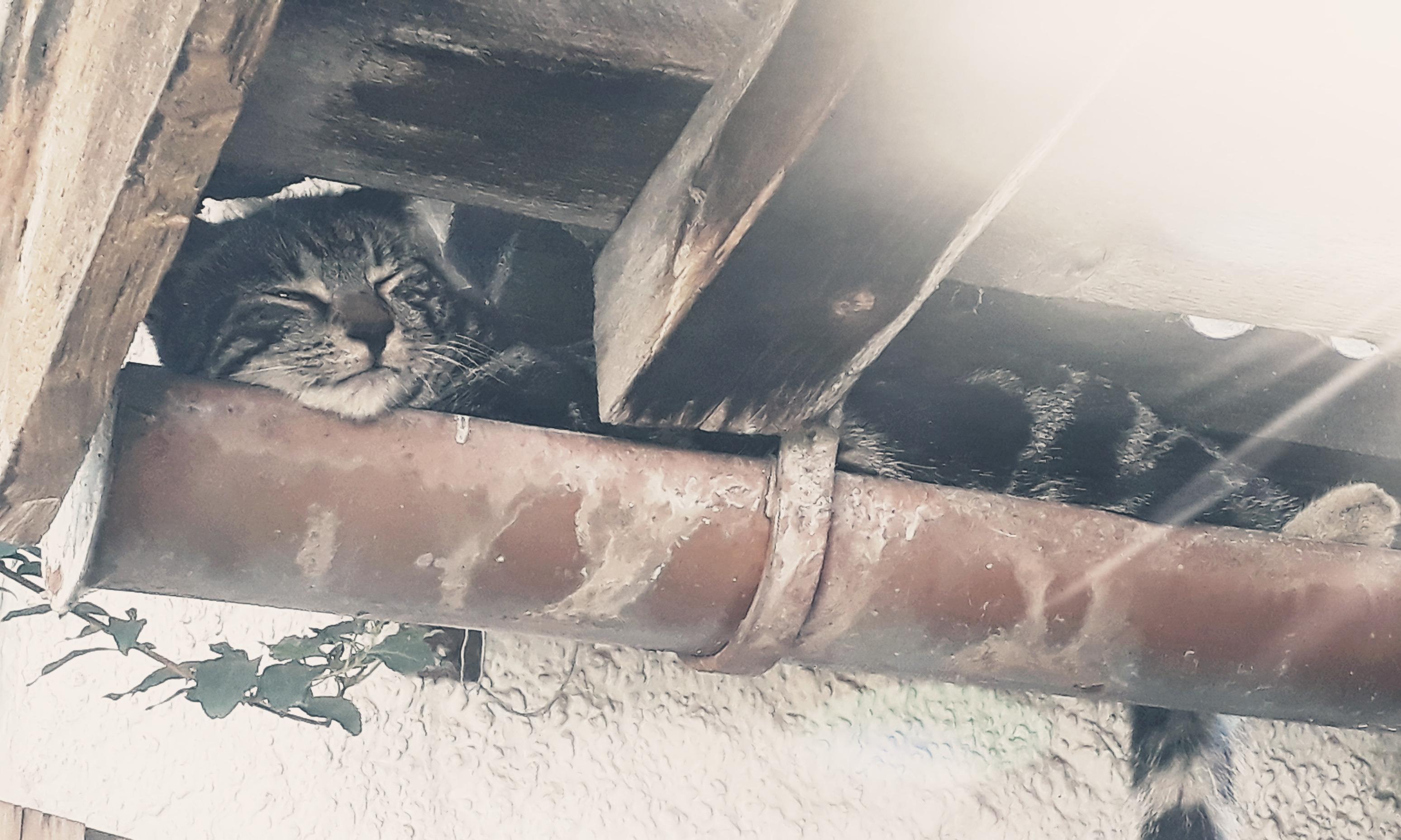 Ist wirklich alles für die Katz?   story.one