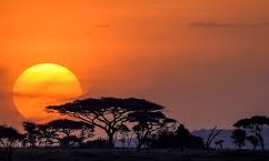 serengeti   story.one