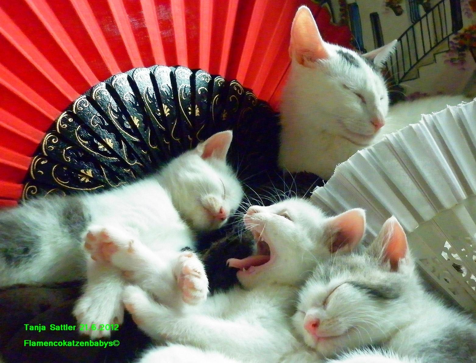 Katzen und Flamenco | story.one
