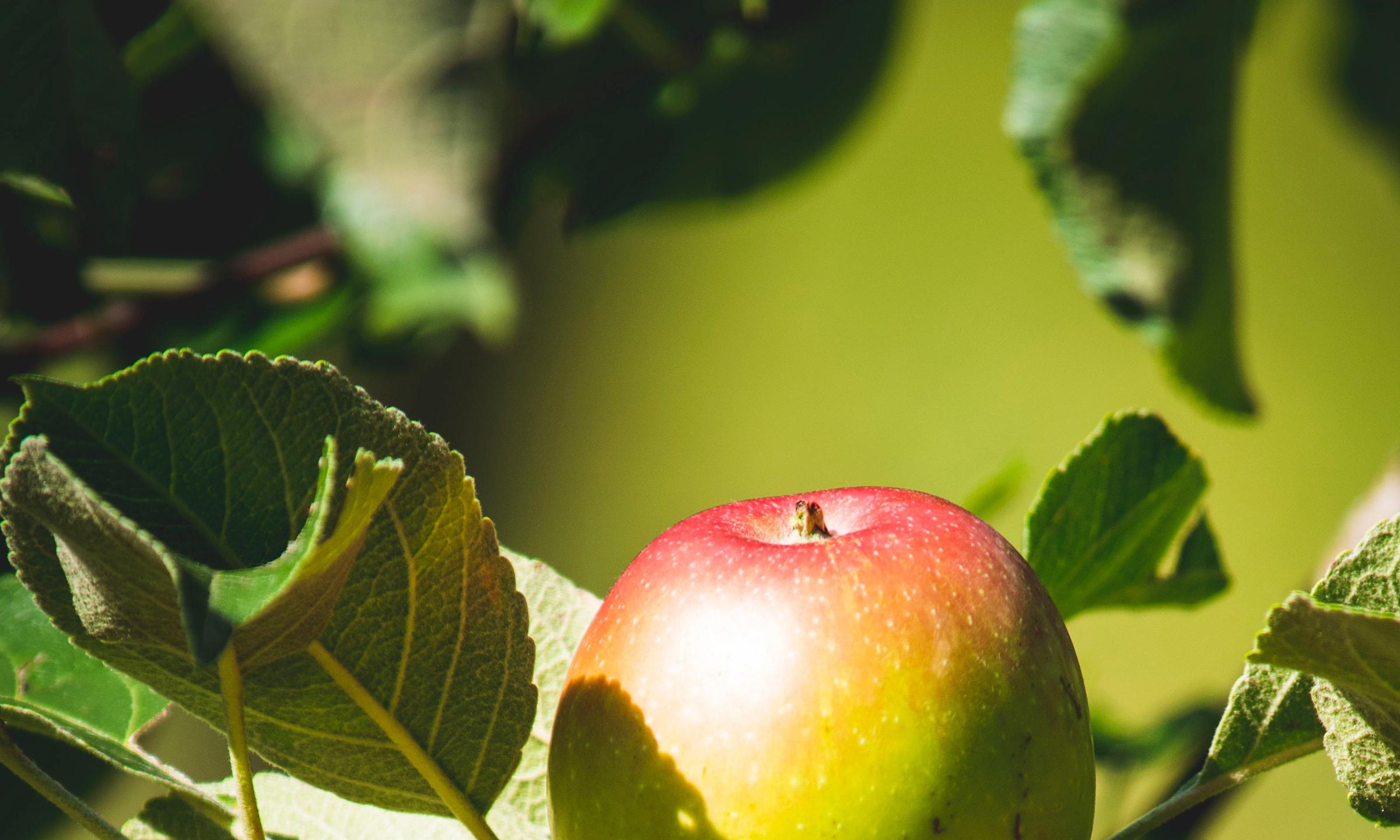 Apfelbaum und Liebestraum | story.one
