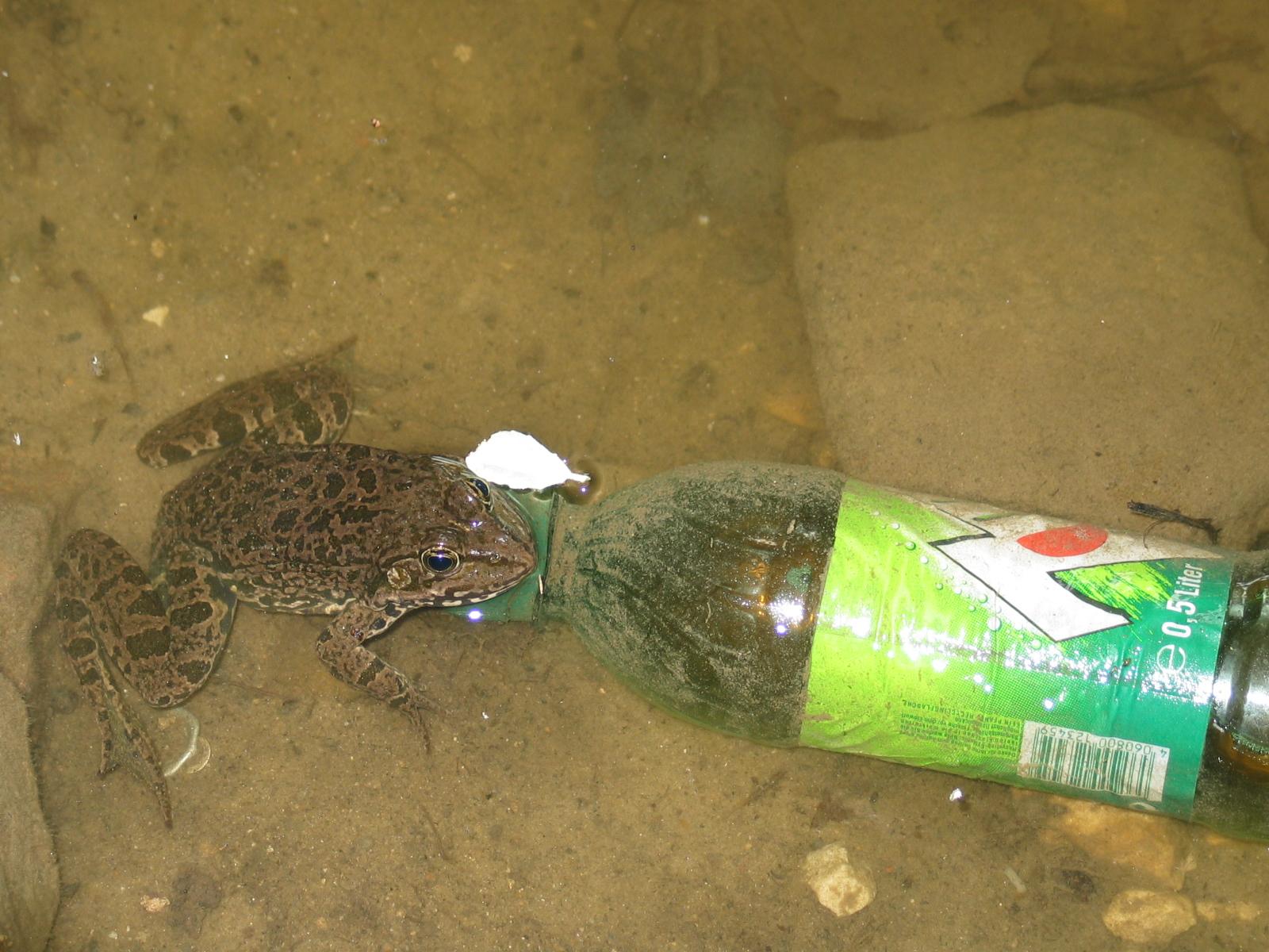 Der Frosch und die Flasche   story.one