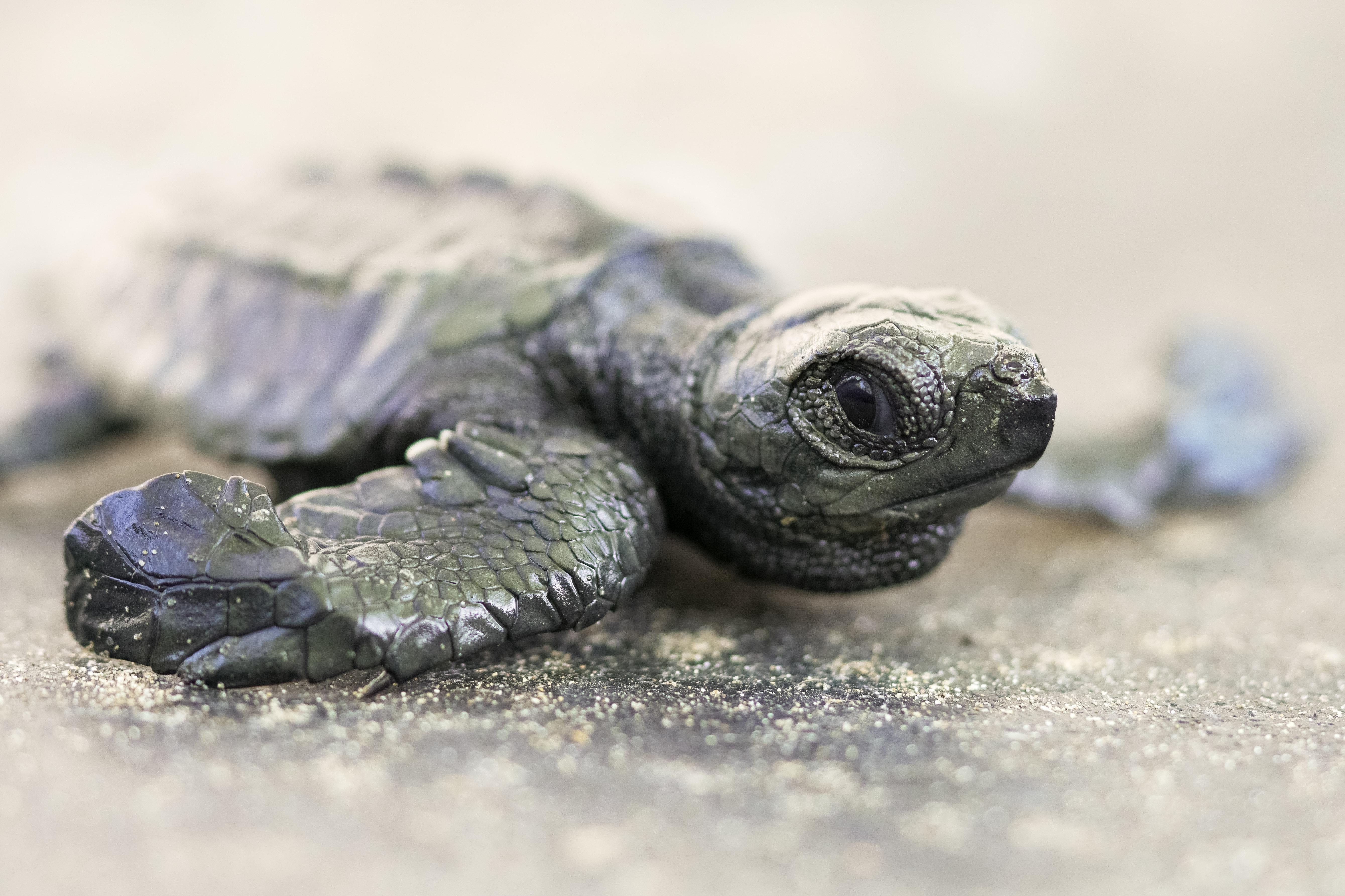 Schildkrötendasein | story.one