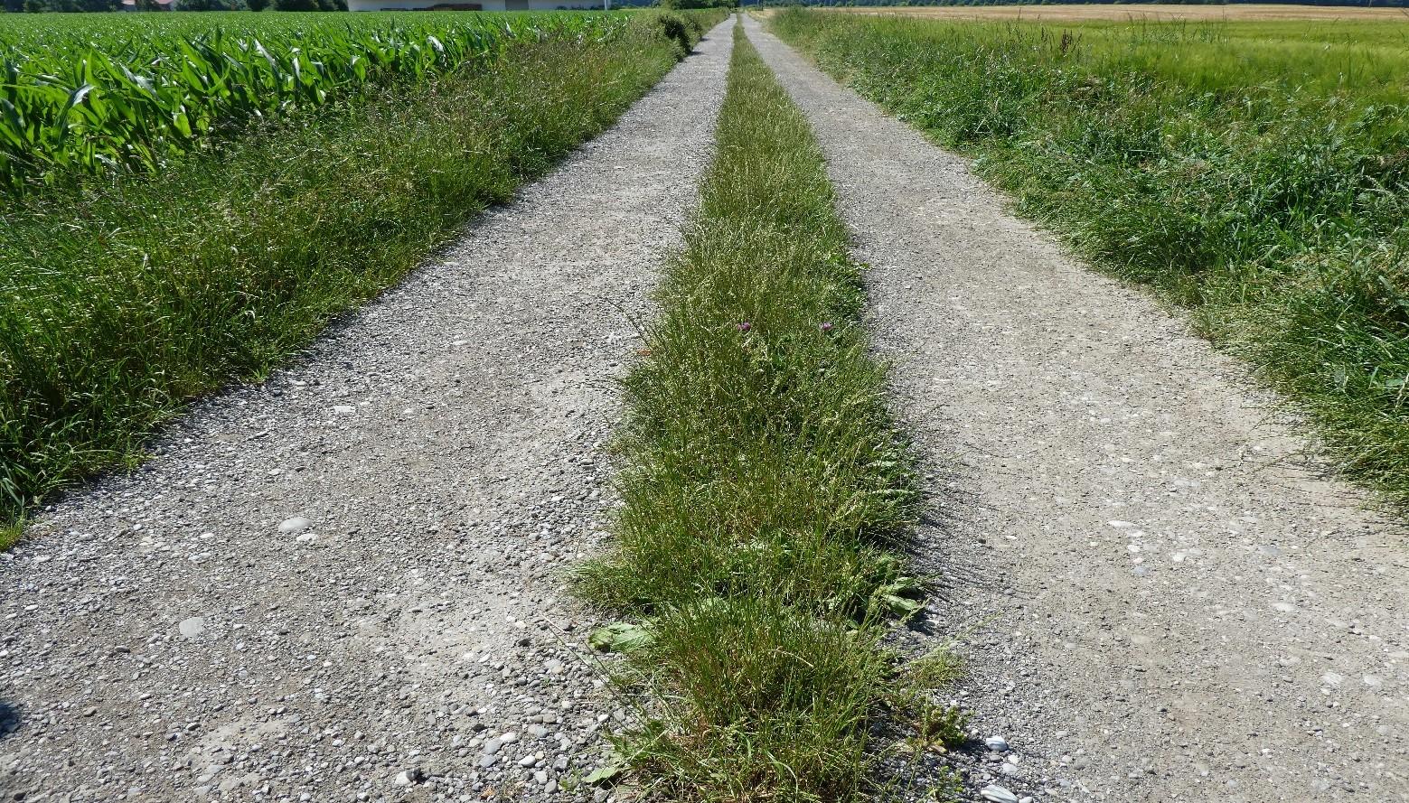 Der gefundene Weg (3/3)   story.one
