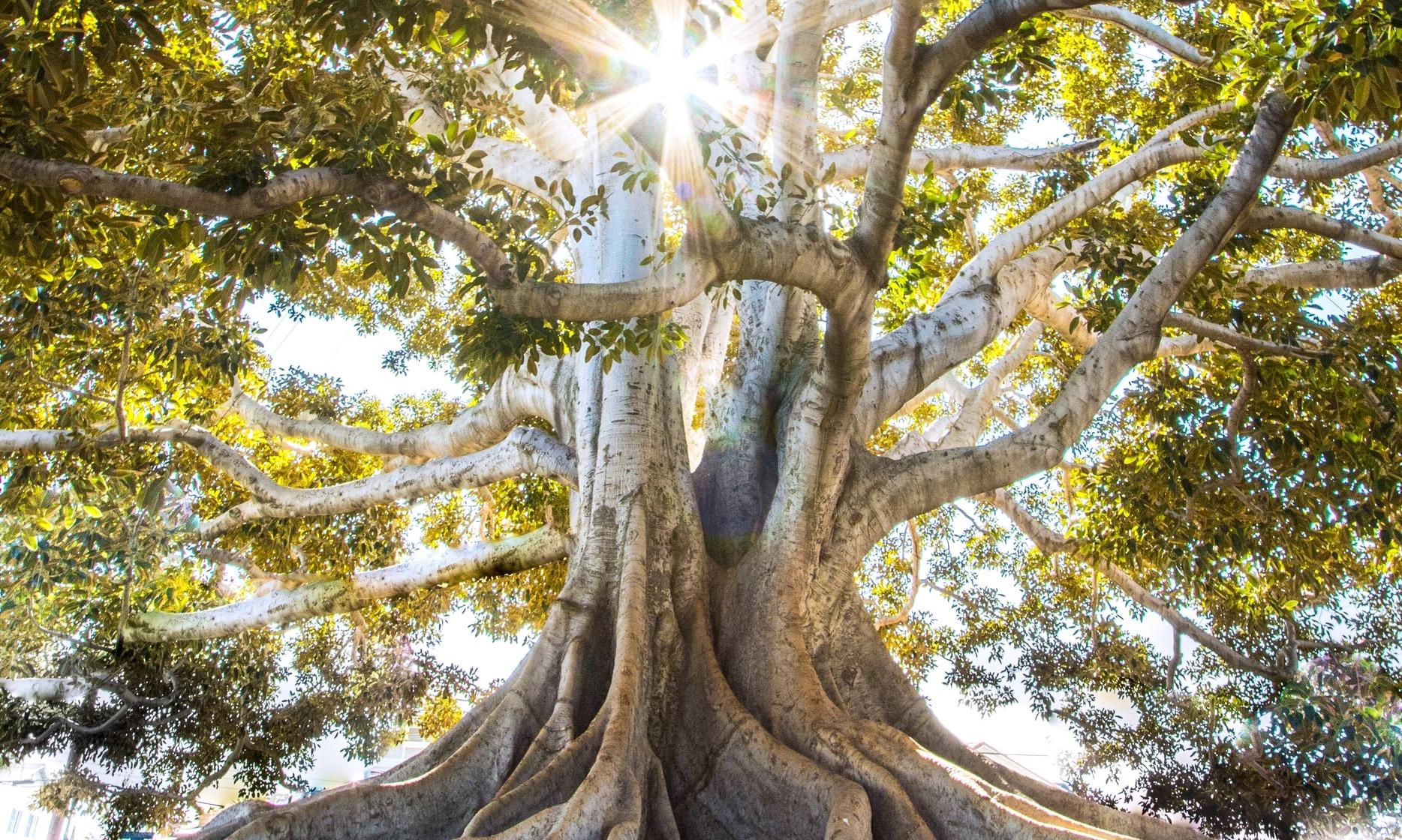 Der alte Baum | story.one