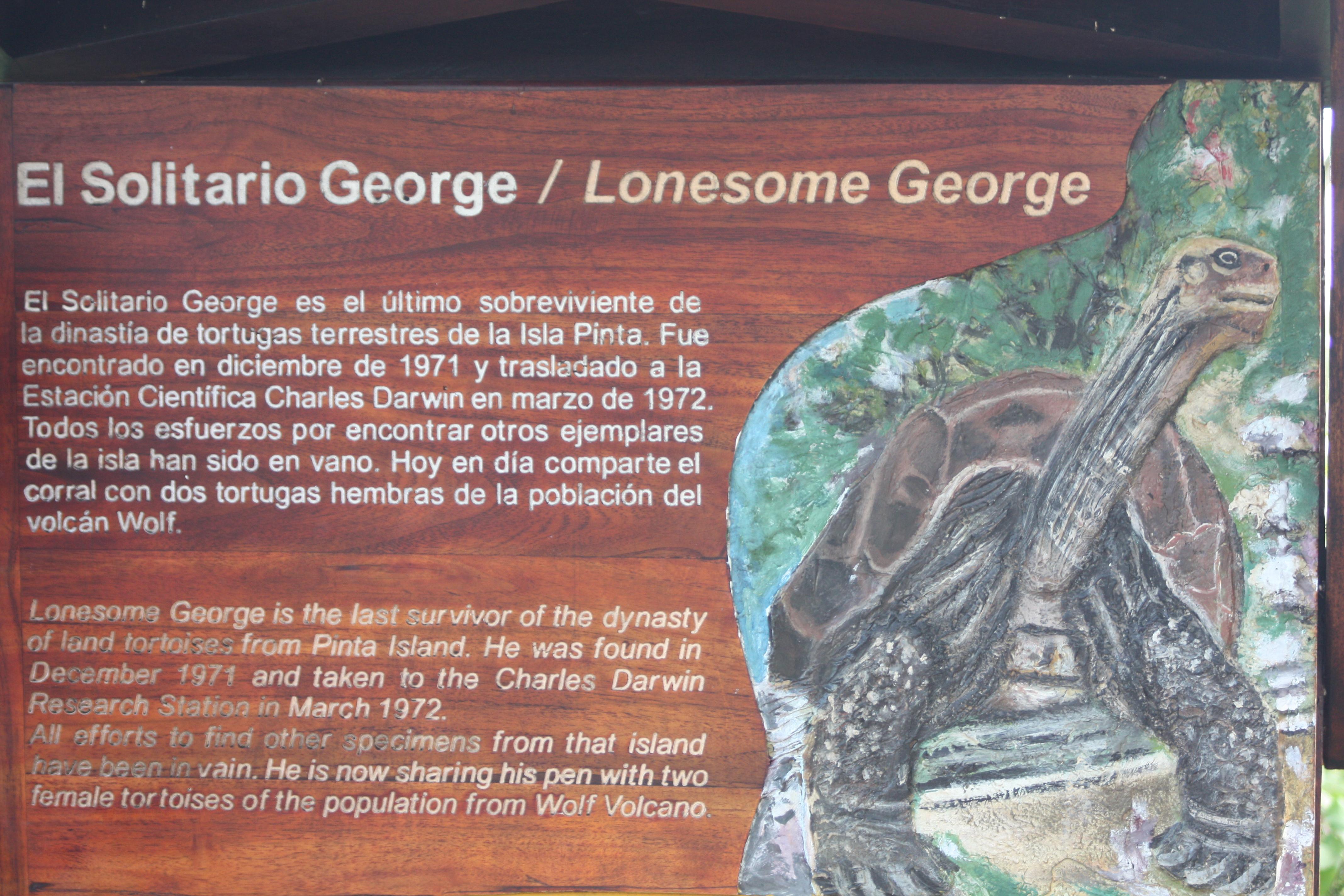 Der einsame Georg | story.one