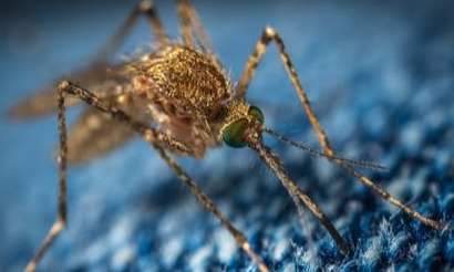 Die Malaria und Ich   story.one