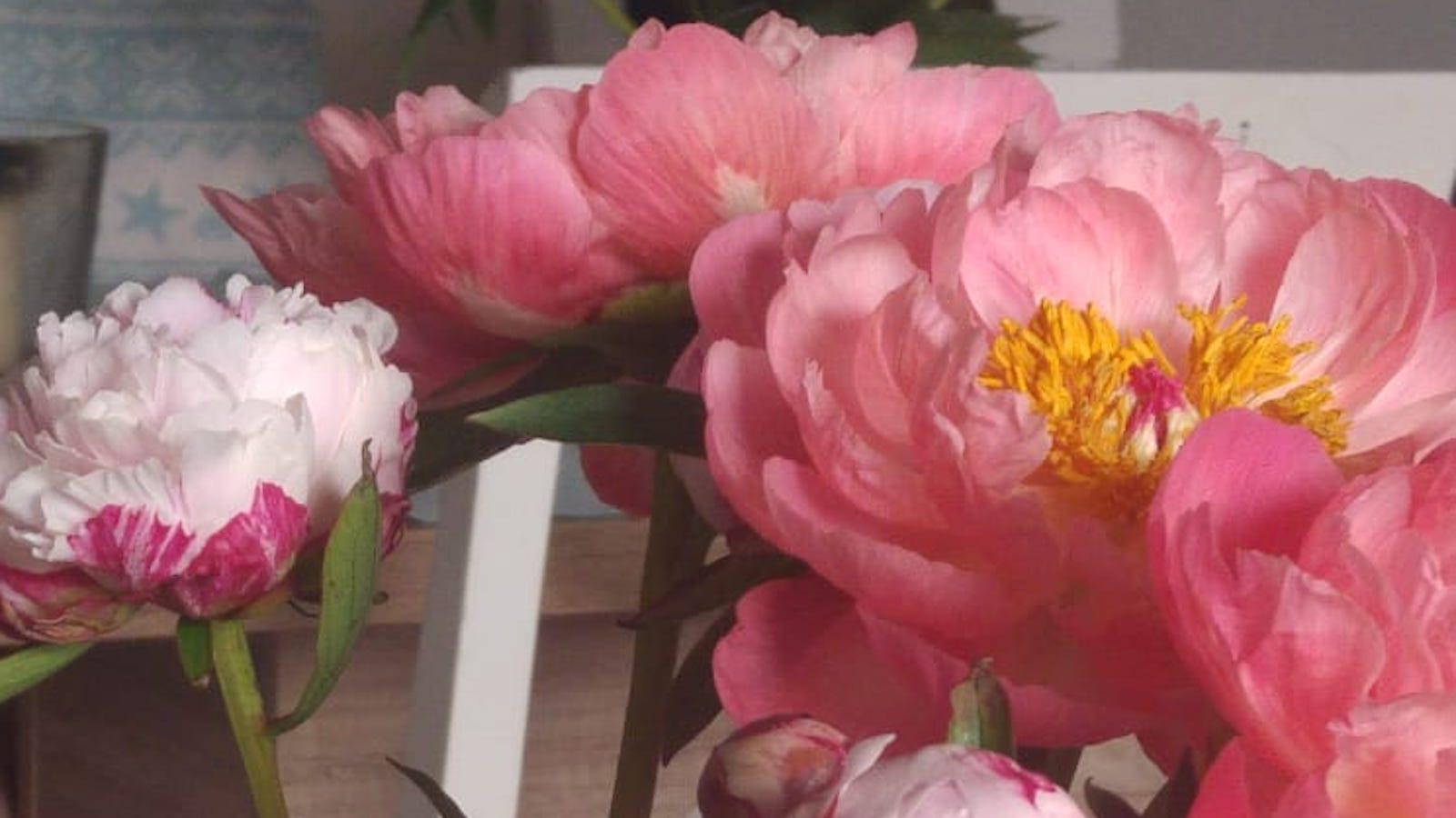 Rosen meines Herzens   story.one