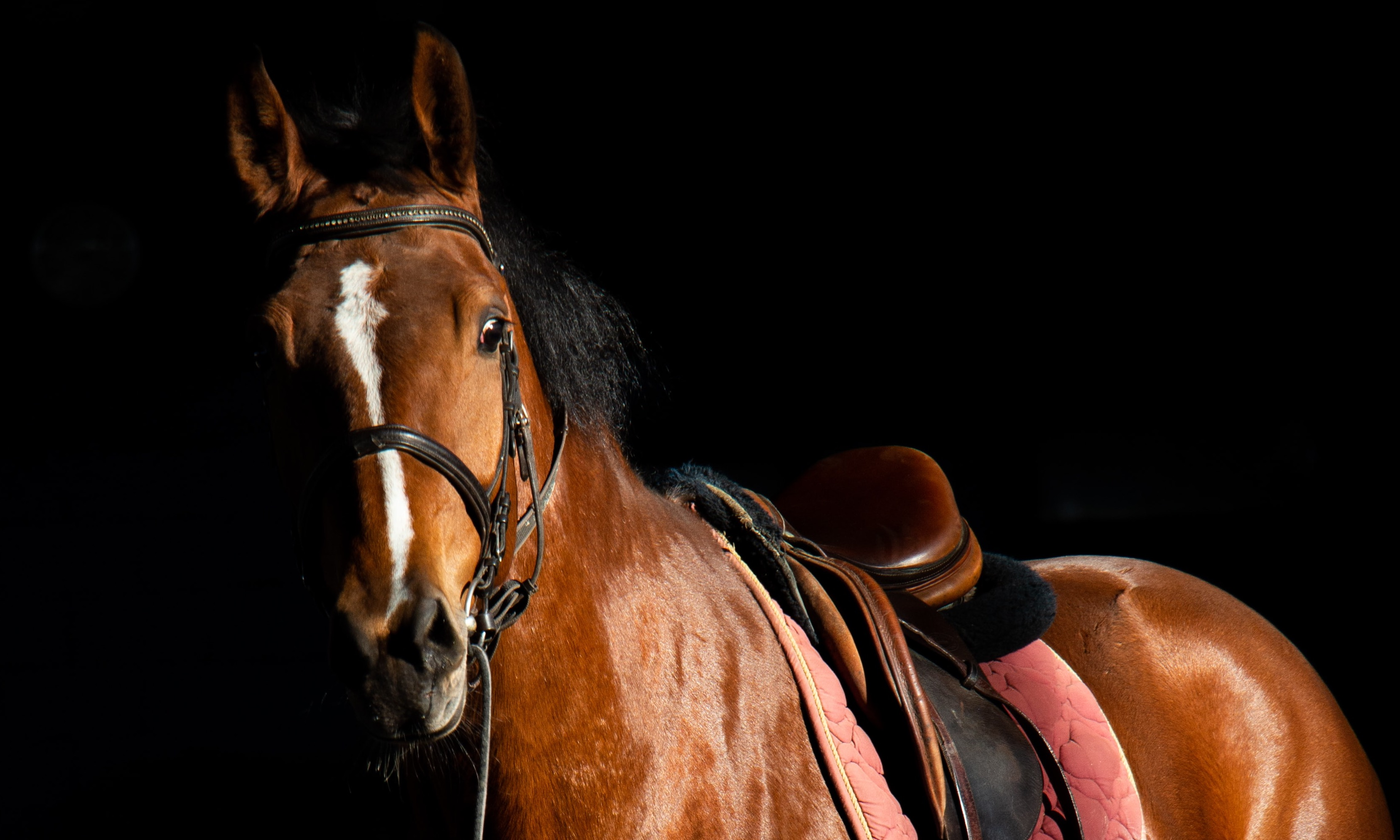 Sprechende Pferde flunkern oft | story.one