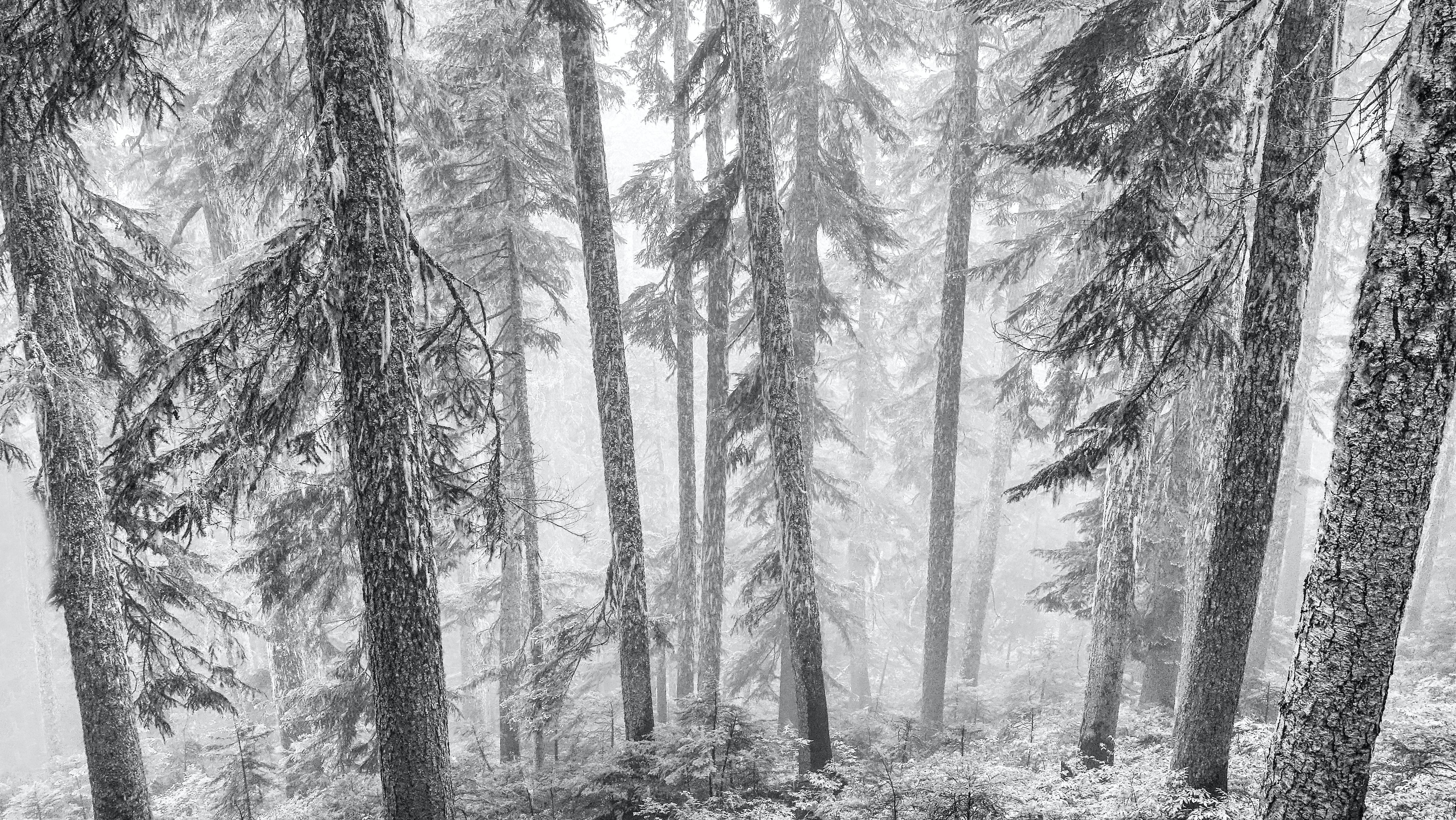Winterstille | story.one