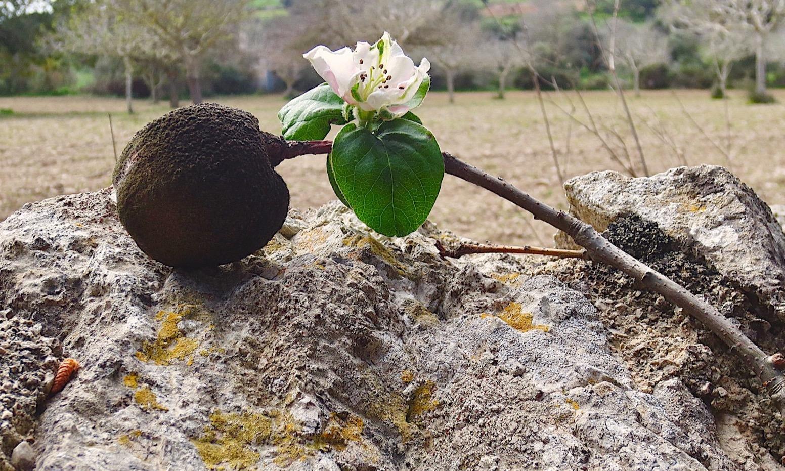 Leidenschaft, die Blüten treibt   story.one