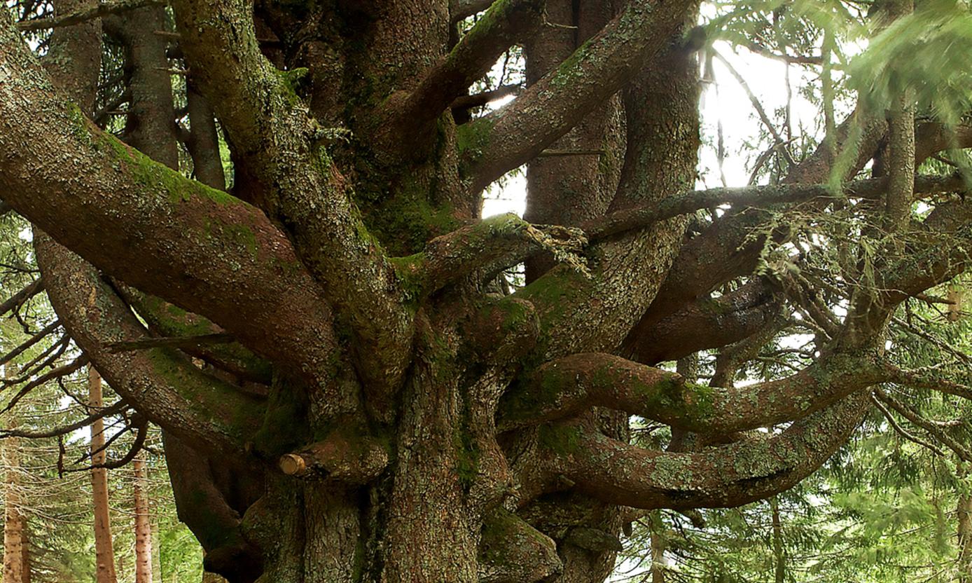 Die Mutter des Waldes | story.one
