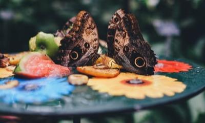 Von bauchschwabbelnden Schmetterlingen | story.one