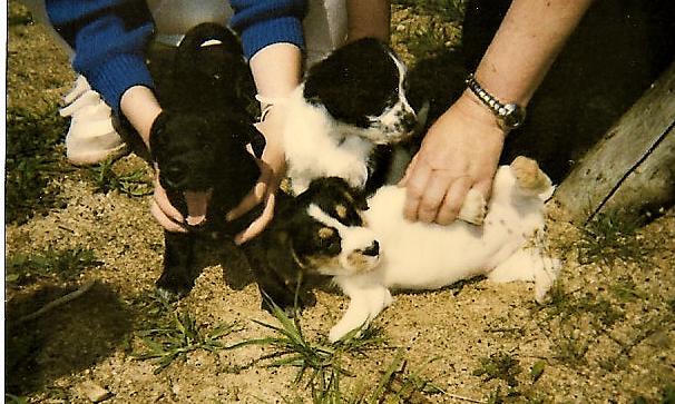 hunde zu verschenken | story.one