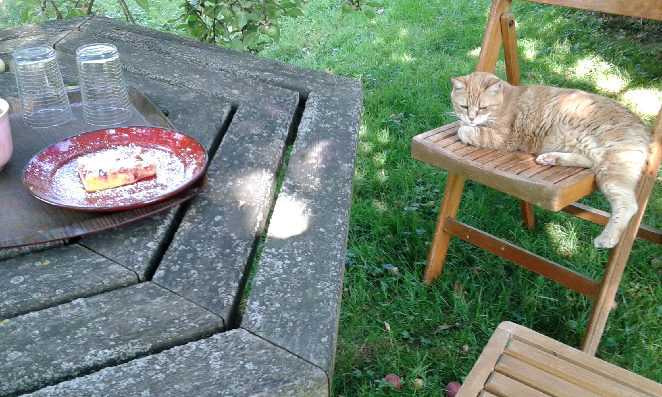 Schülerin meines Gartens | story.one