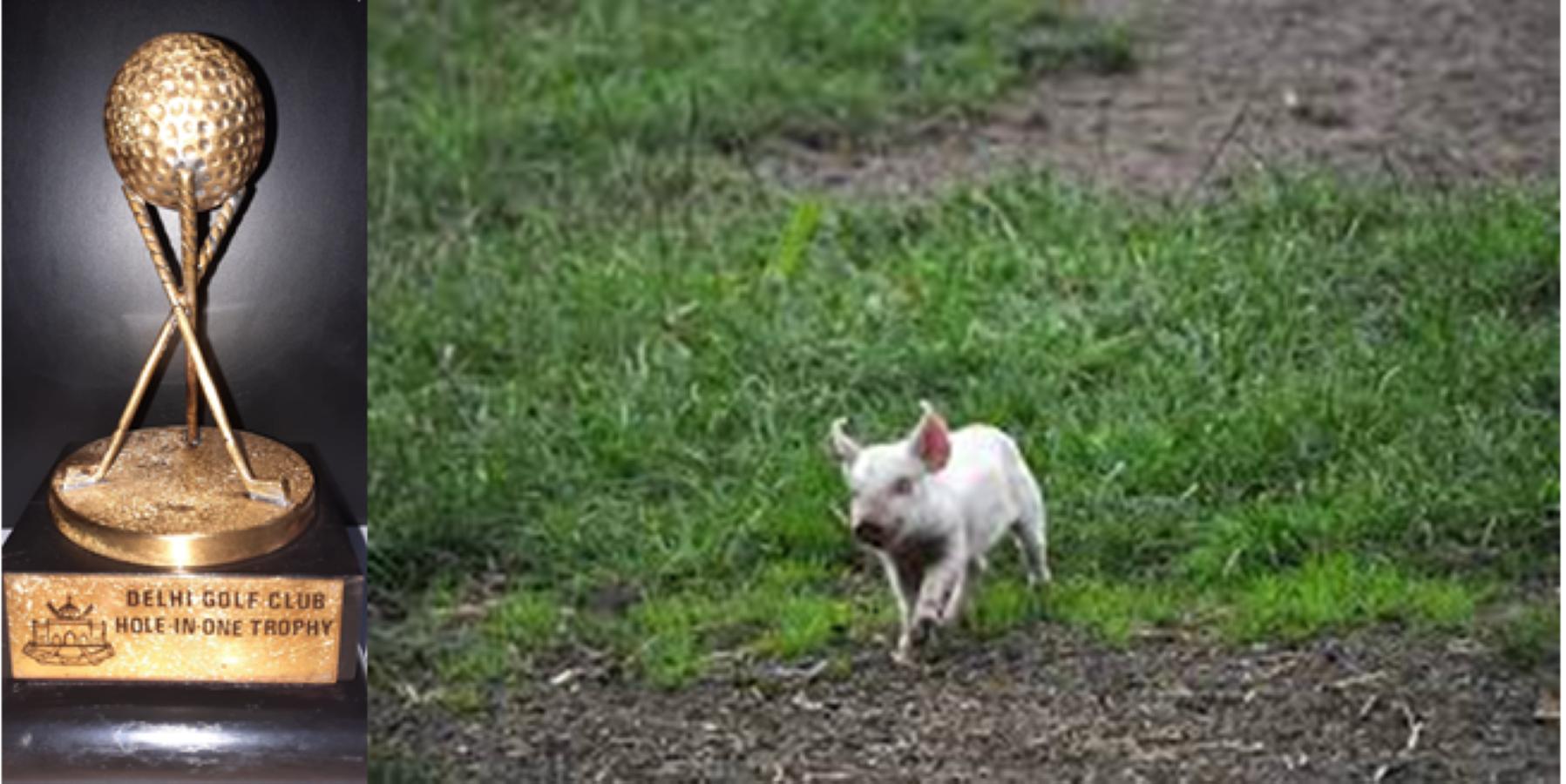Das Schwein im Golfklub | story.one