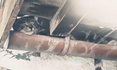 Ist wirklich alles für die Katz? | story.one