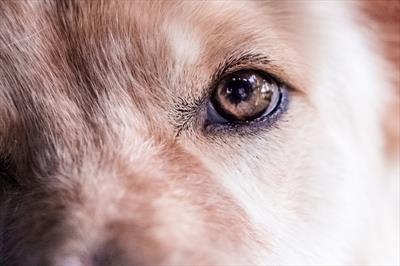 Der Wolf | story.one