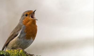 MonaLena Blitzkind spricht mit Vögeln | story.one