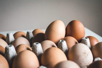 Immer auf die Eier! | story.one