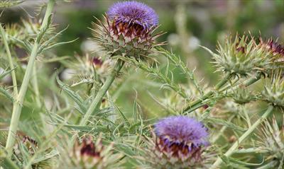 Gartenparadies auf Skye   story.one