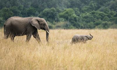 Von Elefanten, Hebammen und Samenspendern | story.one
