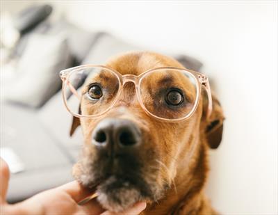 Auch Hunde haben ihren Gott   story.one