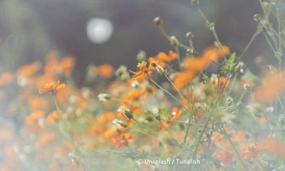 Bienen in der Septemberbrise | story.one