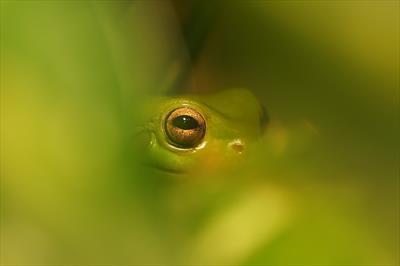 Sei kein Frosch 🐸 - Gedanken | story.one