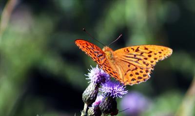 Flügelschlag eines Schmetterlings   story.one