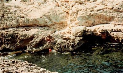 Flitterwochen auf Ibiza   story.one