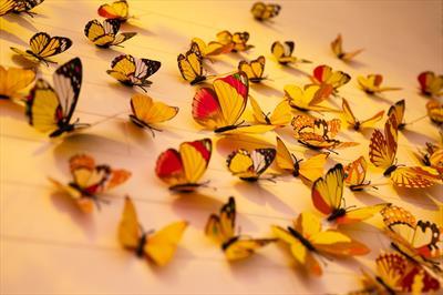 Butterfliegen im Bauch 🦋 - Gedanken | story.one