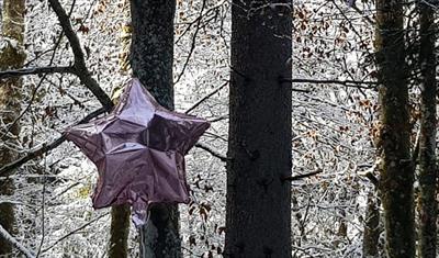 Ein Stern, der keinen Namen trägt | story.one