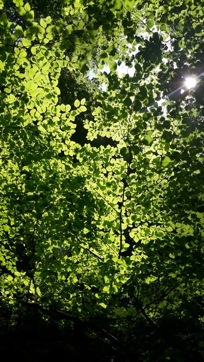 Im Wald | story.one
