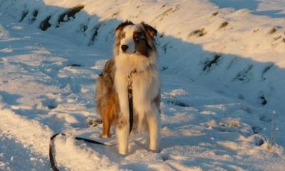 (Hof-)Hunde und mein rechter Hinterreifen | story.one