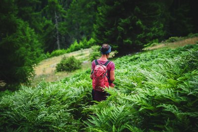 Der Wald und die Berge | story.one
