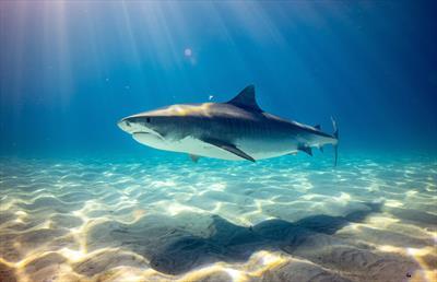 Sharks   story.one