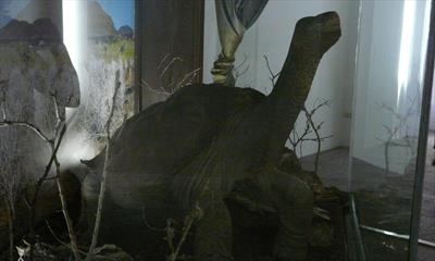 Lonesome George | story.one