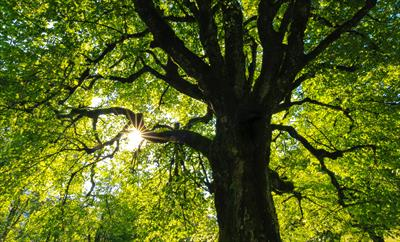 Der Baum | story.one
