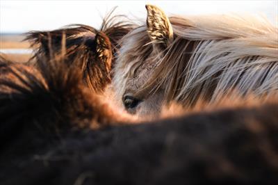 Pferde stehlen 🐴 - Story | story.one