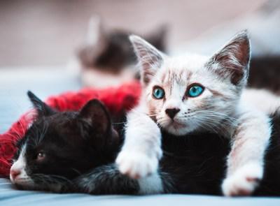 Katzengeschichte | story.one