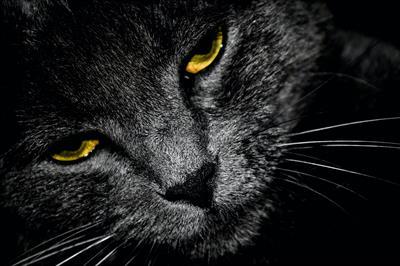 Die sensible Katze Mitzi | story.one