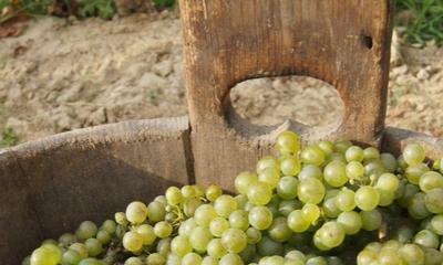 Weintrauben zum Trost | story.one