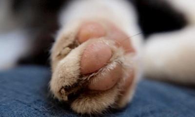 Die Katze heißt Silvester – Ein Nachruf | story.one