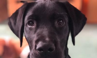 Hund mit Heilkräften | story.one