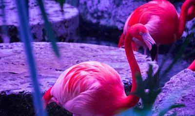 Flynn Flamingo möchte nicht mehr pink sein   story.one
