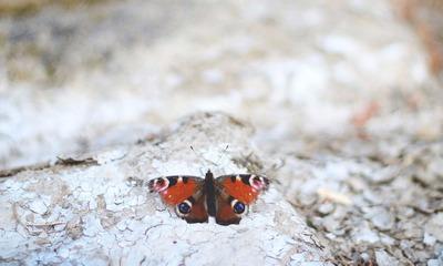 Fauler Geier / schockierter Schmetterling   story.one