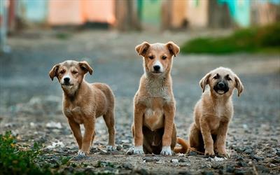 Alle meine Hunde – Bekanntschaften | story.one