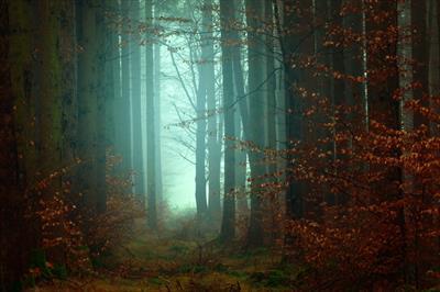 Durch den dunklen Wald | story.one