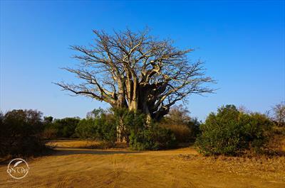 Wege in Simbabwe   story.one