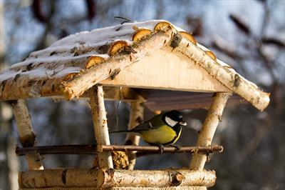 Die Vögel in unserem Garten | story.one